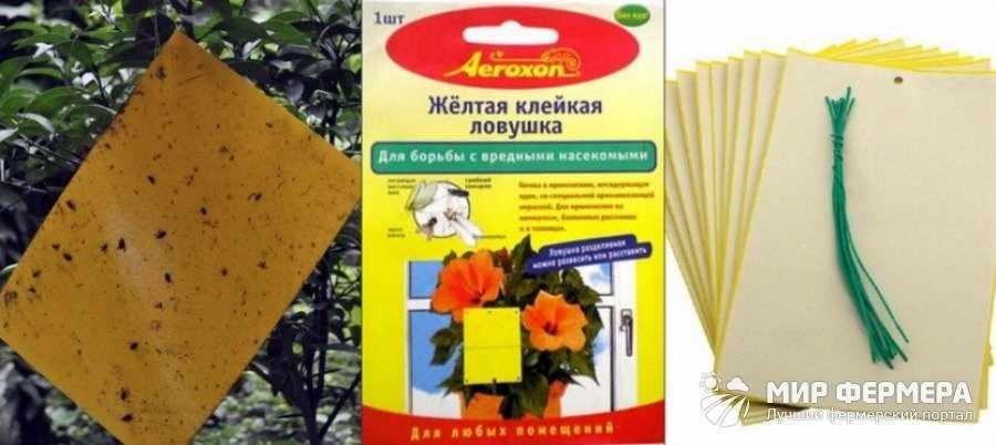 Ловушки для грибных комариков купить