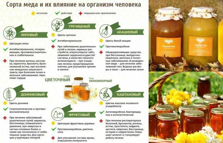 Сорта меда и их характеристика