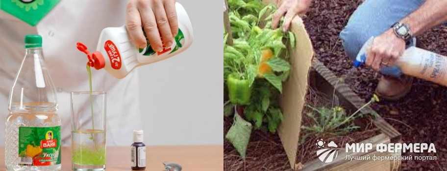 Мыльная вода от сорняков
