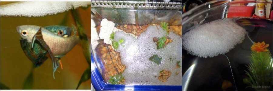 Образование гнезда из пузырьков