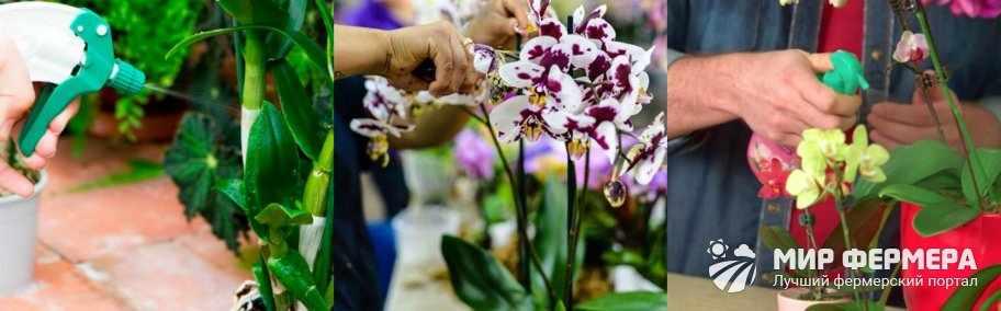 Внекорневая подкормка орхидей