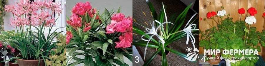 Комнатные растения посадка и уход