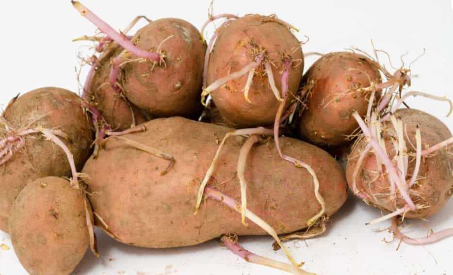 Картофелины волосянки