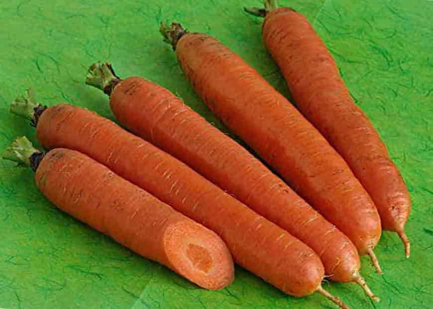 Сорт моркови Тотем F1