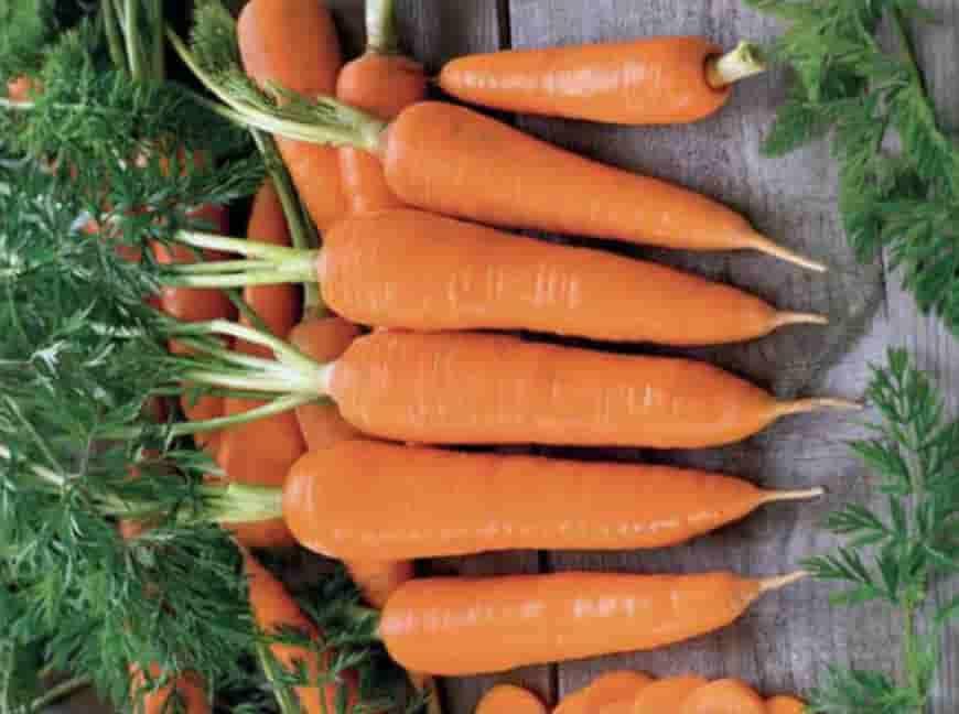 Сорт моркови Флакке