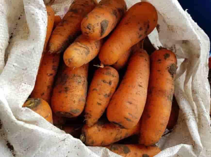 Сорт моркови Финхор