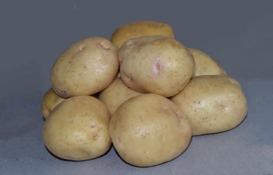 Картофель сорт Невский