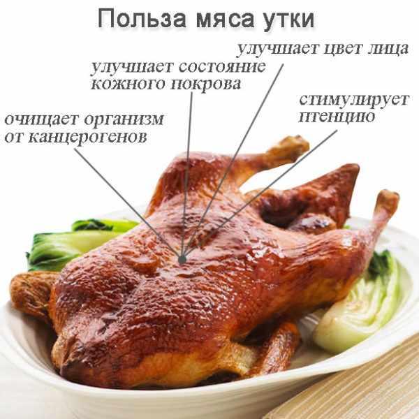 польза мяса утки