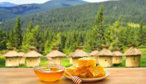 Лесной мед производится не из цветочной пыльцы, а из сладкой секреции насекомых