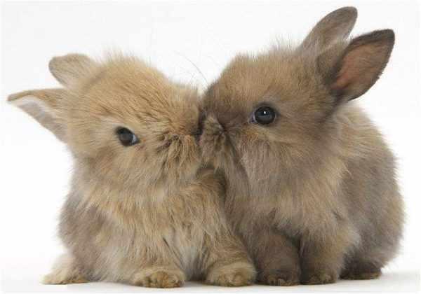 Имена для кроликов