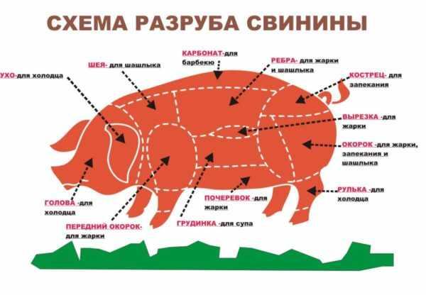 shema-razruba-svini-