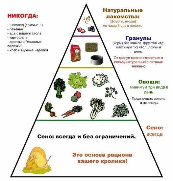 Пирамида-рациона-для-кроликов