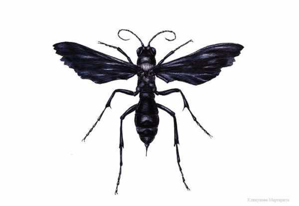 Черная оса