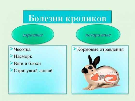 Zaraznye-i-nezaraznye-bolezni-krolikov