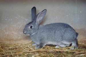Меховой кролик