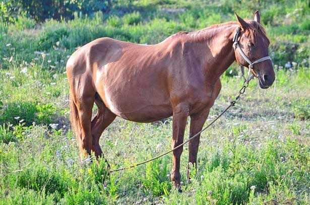 Лошадь спит стоя на лугу