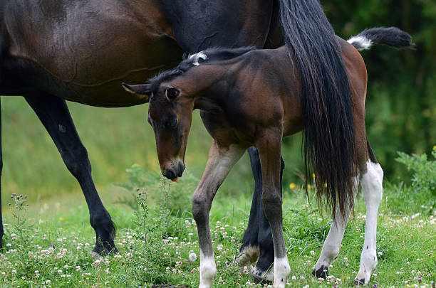 Хвост лошади