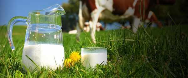 жирность молока