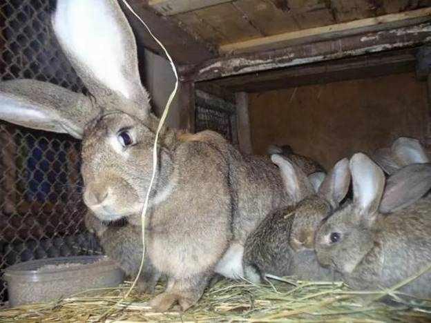Крольчиха с крольчатами в правильно обустроенной клетке