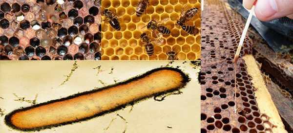 заболевание пчел