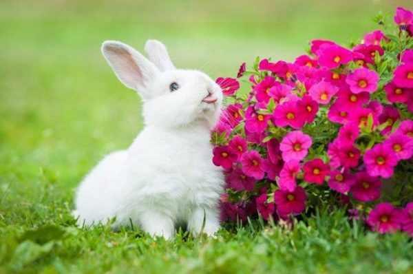 Кролик -девочка