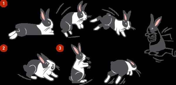 настроение кроликов