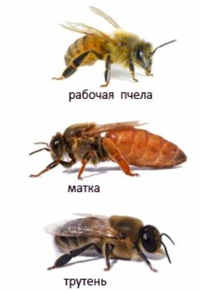 matka-koroleva-ulya