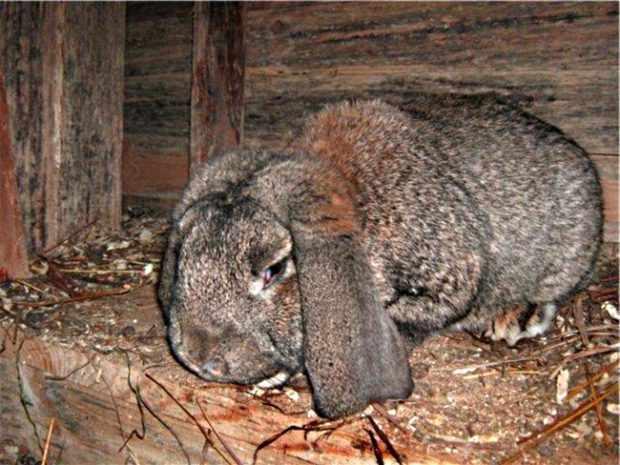 ВГБК у кроля - первые проявления