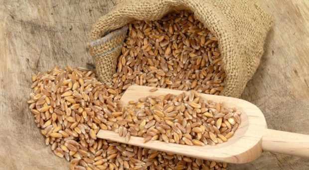 Зерно полбы