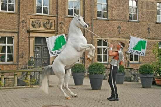 «Эквитана» - выставка лошадей