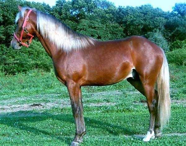 Серебристо-гнедая масть лошадей