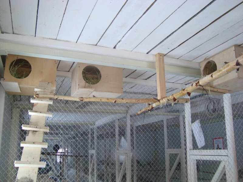 Гнезда для мандаринок в вольере
