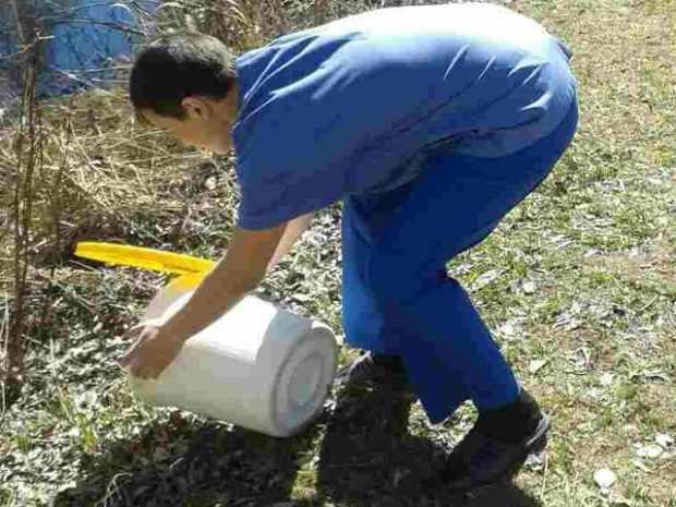 Подкормка ондатр - рассыпание корма