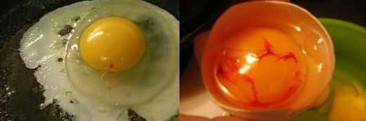 Кровь в яйце