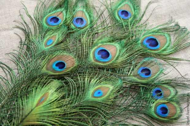 Глаз на перьях павлина