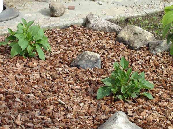 Мульча в саду - кора