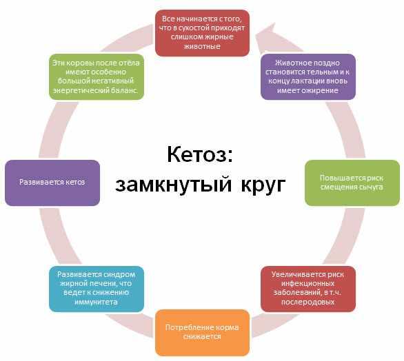 Кетоз у крс - схема развития