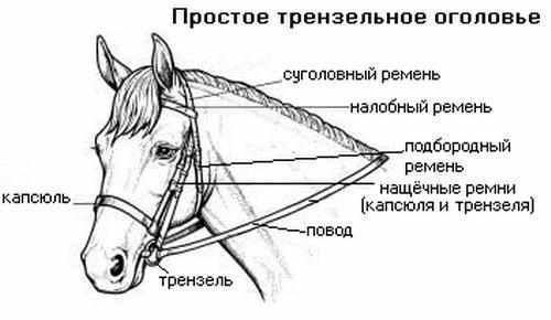 Амуниция для лошади на выездку