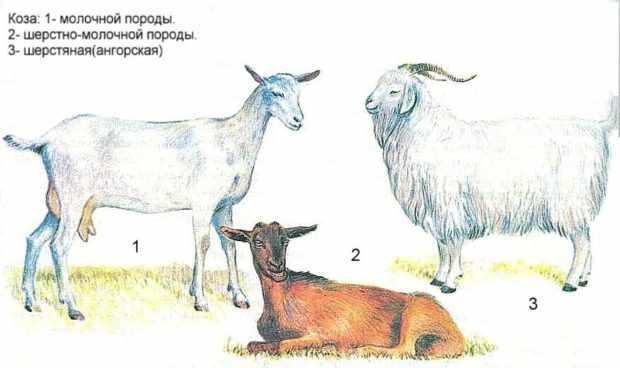Классификация пород коз