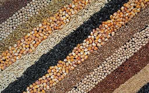 Зерновые для бройлеров - что можно давать