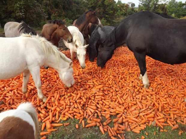 Свежие овощи - обязательная добавка к рациону