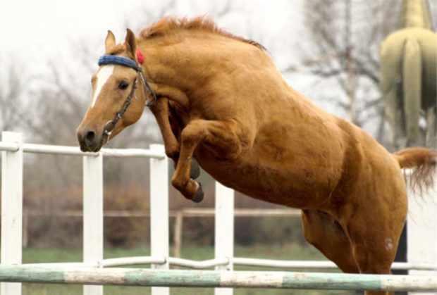 На тренировке донской конь