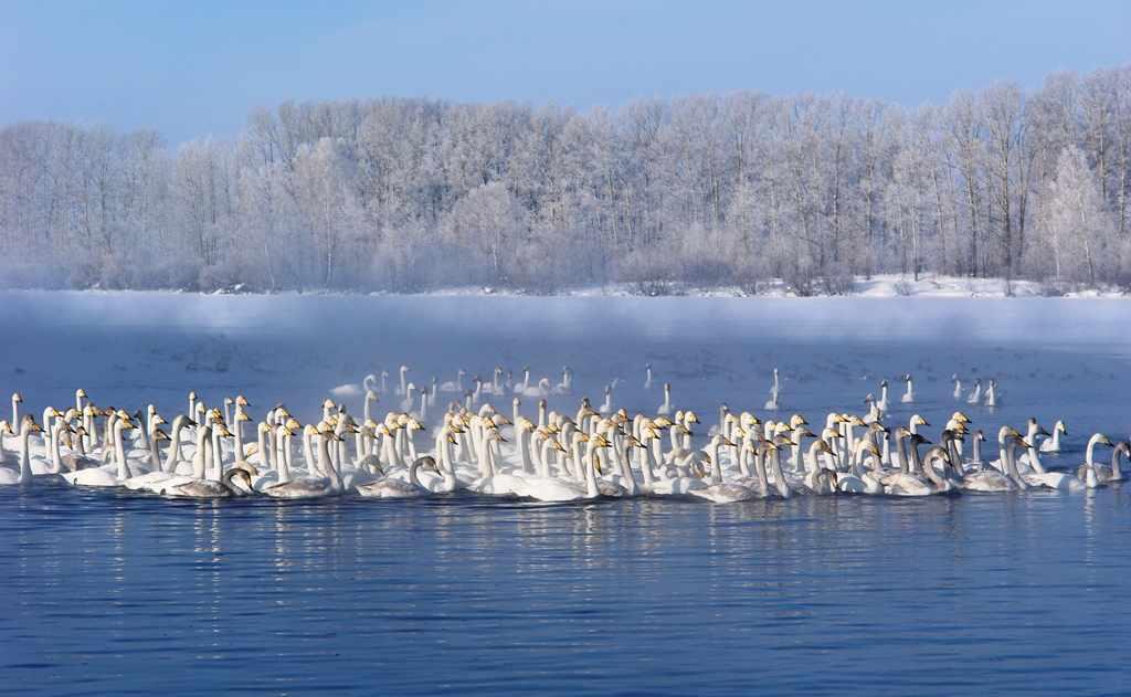 На Алтае Озеро Лебединое