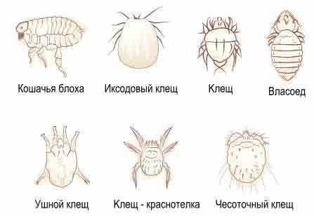 Виды эктопаразитов