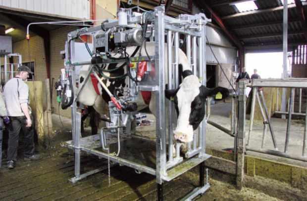 Станок гидравлический для коров
