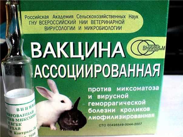 Вакцинация для кролей обзязательная