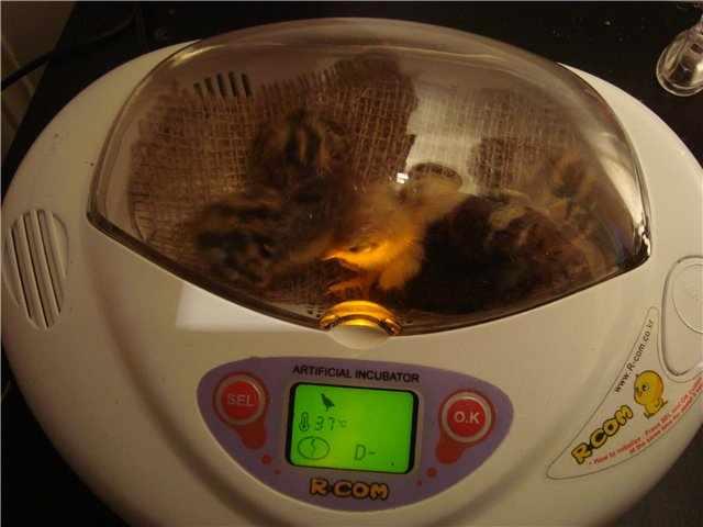 Мини инкубатор на 12 яиц