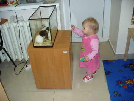 Свинка в аквариуме чувствует себя неуютно