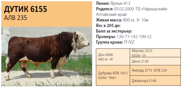 Паспорт быка
