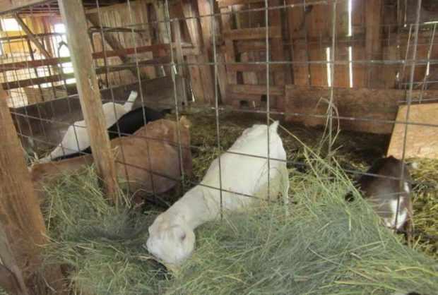 Летний сарай для коз